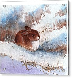 Snow Bunny Acrylic Print by Richard Hinger