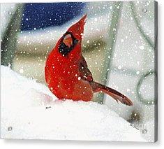 Snow Cardinal Acrylic Print by Yumi Johnson