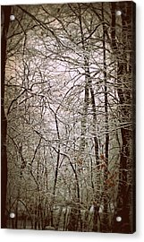 Snow Cover Forest Acrylic Print by Dawdy Imagery