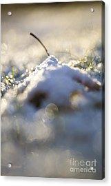 Snow Cover Acrylic Print by Sue OConnor