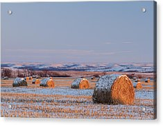Acrylic Print featuring the photograph Snow Covered Bales by Scott Bean