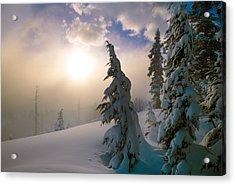 Snow-covered Pine Trees, Sunrise Acrylic Print