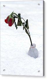 Snow-covered Rose Acrylic Print by Joana Kruse