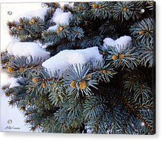 Snow Covered Spruce Acrylic Print by Mikki Cucuzzo