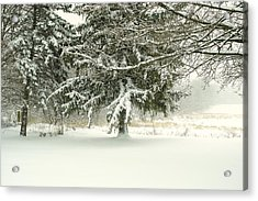 Snow-covered Trees Acrylic Print by Lars Lentz