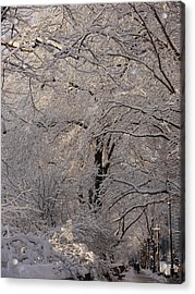 Snow Covered Trees On Central Park West Acrylic Print by Winifred Butler