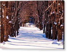 Snow Covered Way Acrylic Print by Lee Costa