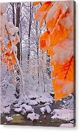 Snow Covered Woods And Stream Acrylic Print