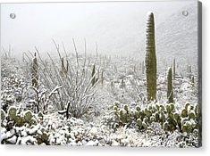 Snow Day In The Desert  Acrylic Print by Saija  Lehtonen