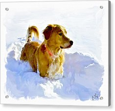 Snow Dog Acrylic Print