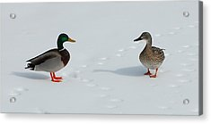 Acrylic Print featuring the photograph Snow Ducks by Mim White