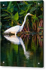 Snow Egret And Its Reflection Acrylic Print by Andres Leon