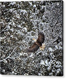 Acrylic Print featuring the photograph Snow Flight Bald by Britt Runyon