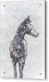 Snow Flurry Acrylic Print