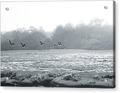 Snow And Geese Acrylic Print
