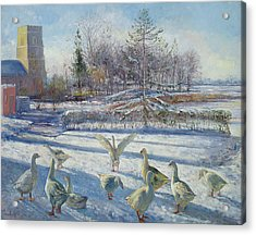 Snow Geese, Winter Morning Acrylic Print by Timothy Easton