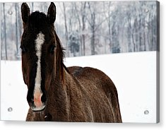 Acrylic Print featuring the digital art Snow Horse by Linda Segerson