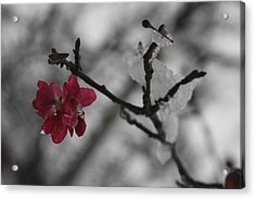 Snow In October Acrylic Print