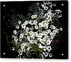 Acrylic Print featuring the photograph Snow In Summer by Joann Copeland-Paul