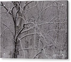 Snow In The Trees At Bulls Island Acrylic Print