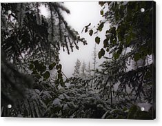 Snow In Trees At Narada Falls Acrylic Print
