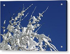 Snow Laden Acrylic Print