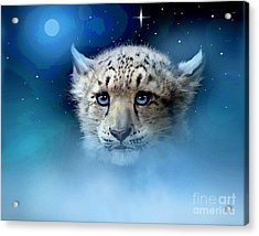 Snow Leopard Cub Acrylic Print by Robert Foster
