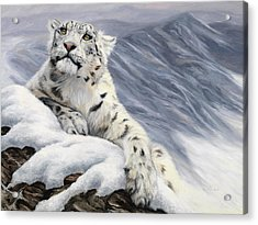 Snow Leopard Acrylic Print by Lucie Bilodeau