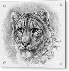 Snow Leopard - Panthera Uncia Acrylic Print by Svetlana Ledneva-Schukina