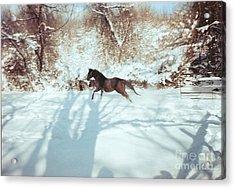 Snow Lover Acrylic Print