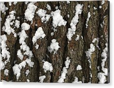 Snow On Pine Bark Acrylic Print