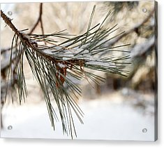 Acrylic Print featuring the photograph Snow Pine by Courtney Webster