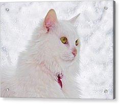 Snow Princess Acrylic Print by Judy Via-Wolff