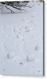 Snow Rollers Acrylic Print
