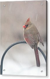 Snow Shower Acrylic Print by Kay Pickens