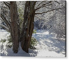 Snow Sparkles Acrylic Print by Dianne Cowen