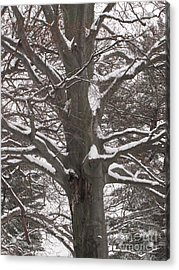 Snow Tree Acrylic Print by Melissa Stoudt