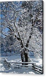 Snow Tree - Yosemite National Park Acrylic Print by Jim Pavelle
