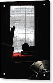 Snow Watching Acrylic Print