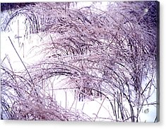 Snow Weeds 31 Acrylic Print by Stephen Parker