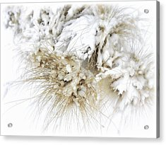 Snow Whiskers Acrylic Print