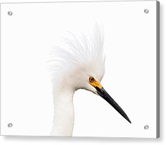Acrylic Print featuring the photograph Snow White Egret by Phil Stone