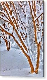 Snow Wonderful Snow - Greensboro North Carolina Acrylic Print by Dan Carmichael