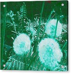 Snowballs In The Garden Acrylic Print