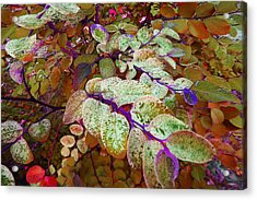 Acrylic Print featuring the photograph Snowbush by Ginny Schmidt
