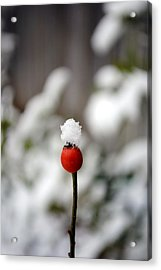 Acrylic Print featuring the photograph Snowcap by Kelly Nowak