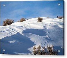 Snowdrifts Acrylic Print