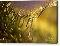 Snowdrop Crystal Acrylic Print by Sharon Talson