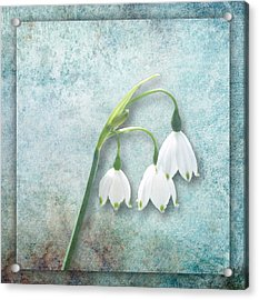 Snowdrop Acrylic Print by Lynn Bolt