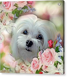 Snowdrop The Maltese Acrylic Print by Morag Bates